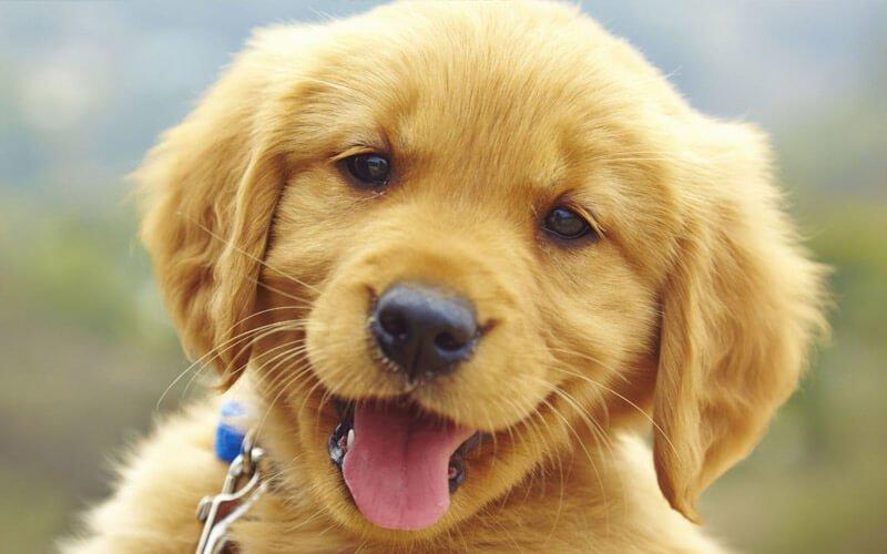 I cani assicurerebbero il loro umano?