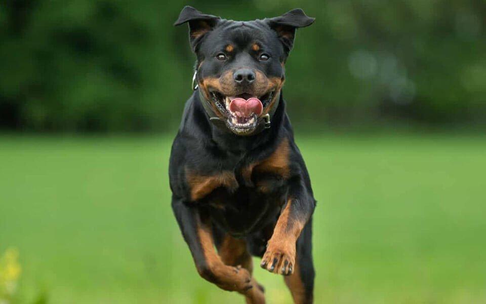 Cane decapita il suo custode