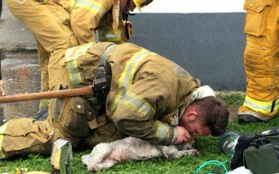Cane salvato dai pompieri con la respirazione bocca a bocca