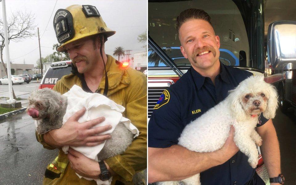 Cane salvato dai pompieri-con la respirazione bocca a bocca lavato e coccolato