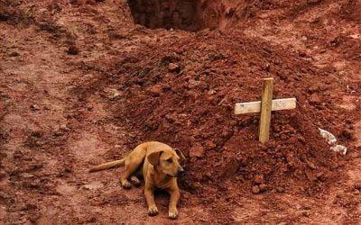 Leao, il cane che veglia la padrona morta