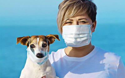 Cani e Coronavirus, gatti e Covid-19…