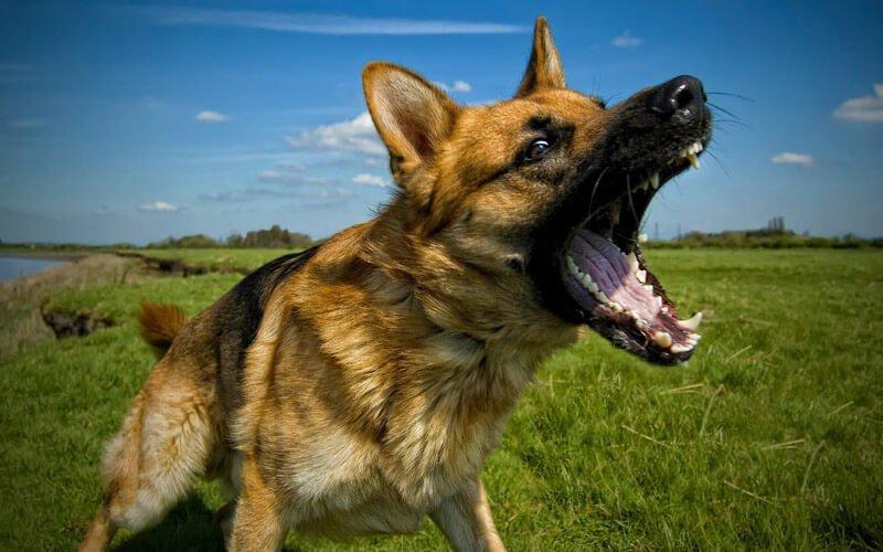 Lista di Cani di Razza Pericolosa
