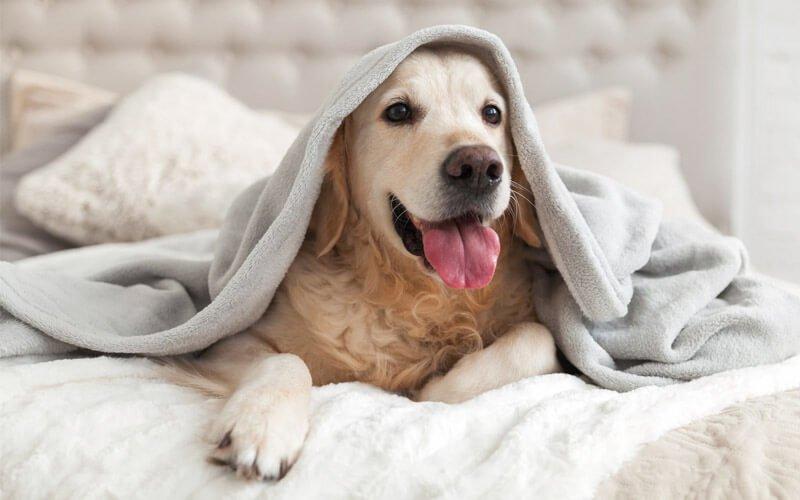 Quanto costa una assicurazione cane?