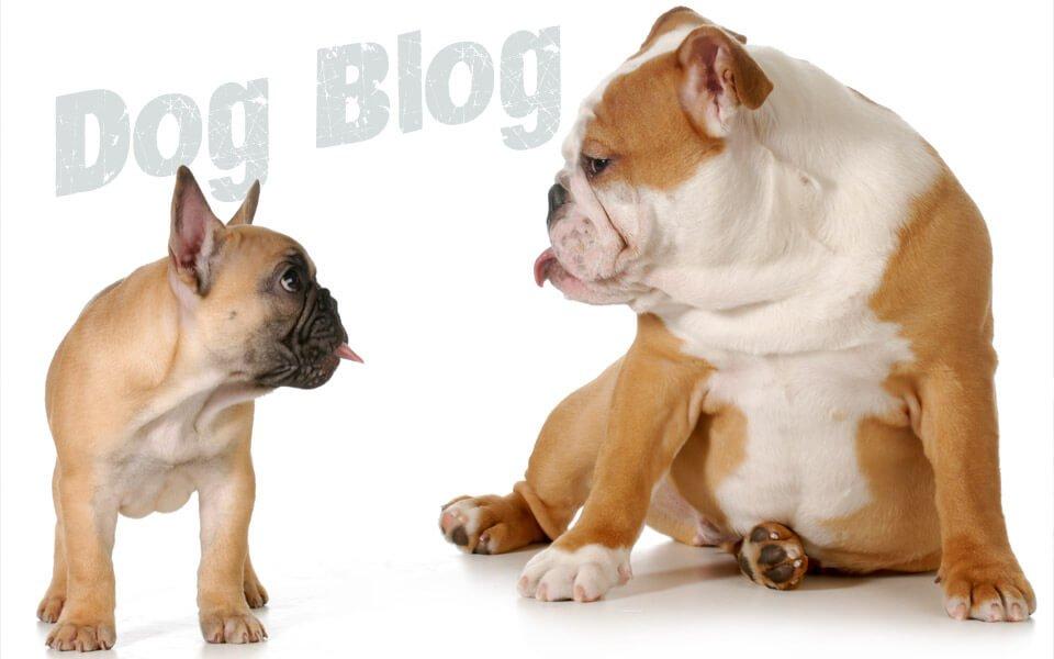 Foto intestazione del Dog Blog di Assicurazione Cane